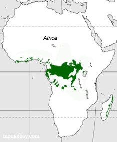 Congo Basin On Map Of Africa.151 Best Magical Rainforest Images Beautiful Places Animals In