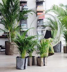 Plantas de Interior para Purificar los Ambientes ⋆ Siendo Saludable