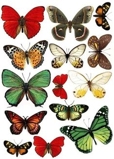Butterfly Pictures to Print. 12 butterfly Pictures to Print. Butterfly Images, Vintage Butterfly, Butterfly Art, Paper Butterflies, Vintage Clipart, Paper Art, Paper Crafts, Illustration, Summer Crafts