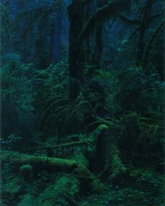 Yoshihiko Ueda. - green darkness , so beautifull