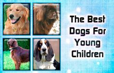 The Best Dogs For Young Children https://didyouknowpets.com/2016/09/29/the-best-dogs-for-young-children/