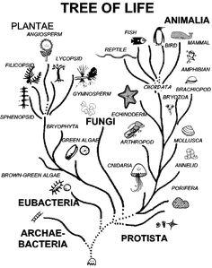 tree of life biology