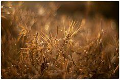 autumn swirl / 500px Dandelion, Autumn, Flowers, Plants, Photography, Photograph, Fall Season, Dandelions, Fotografie