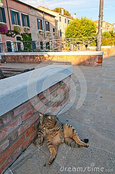 Venice Italy Cat On The Street - Download From Over 53 Million High Quality Stock Photos, Images, Vectors. Sign up for FREE today. Image: 33426310