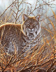 Bobcat Art Canvas Print Big cat Wildlife Art por WildlifeandArt