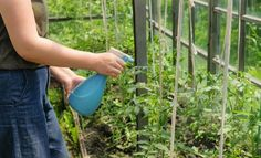 Garden Wall Designs, Garden Design, Outdoor Plants, Garden Plants, Chlorophytum, Design Jardin, Green Life, Horticulture, Houseplants