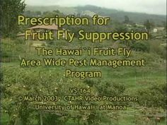 Controlling pest fruit flies in your fruit and cucurbit crops. Presented by the Area-wide fruit Fly Control Program in Hawaii. Fly Control, Fruit Flies, Agriculture, Hawaii, Youtube, Hawaiian Islands, Youtubers, Youtube Movies