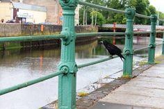 Black Bird My Photos, Bird, Black, Black People, Birds