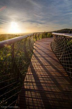 South Africa's Stunning Treetop Walkway