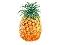 Image from http://images.clipartpanda.com/pineapple-background-tumblr-pineapple-print.jpg.