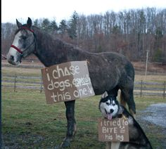 I chase dogs - Horses Funny - Funny Horse Meme - - I chase dogs The post I chase dogs appeared first on Gag Dad. Funny Horse Memes, Funny Horses, Funny Dogs, Horse Humor, Funny Kitties, Adorable Kittens, Kitty Cats, Horse Shaming, Dog Shaming