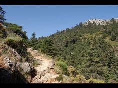 Yunquera (Málaga), paraíso del pinsapo / Yunquera (Málaga), paradise of the Spanish fir