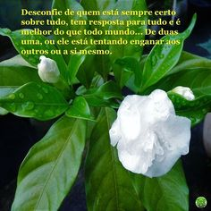 #desconfie #confiança #certezaabsoluta #enganar-se #3nganaraosoutros #psicologia #psicóloga #NovaIguaçu #cognitivocomportamental #followme