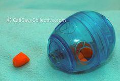 eggcersizer guinea pig toy review
