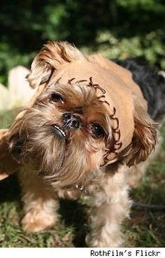 If I had a dog like this, I would name it Wicket and dress it like an Ewok every day.