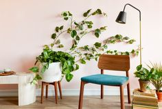The Easiest Way to Make a Living Greenery Wall — Sponsored By Command™ Brand