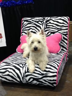 2012 Holiday Pet Expo @Diane Haan Lohmeyer Pet Expos  Coverage of the 2012-2014 Amazing Pet Expos from their Online Ambassador - Preston from PrestonSpeaks.com.