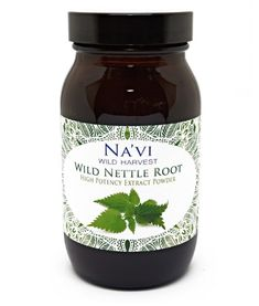 Nettle root comes from the stinging nettle plant, also known as Urtica dioica. With a long tradition of medicinal use, stinging nettle was historically used to treat joint pain and help the body rid itself of excess water. Traditionally speaking, the root of the nettle plant has been considered a tonic to the kidneys and bladder, it's said it could be supportive at various urinary problems. Today, it's said it could be used for its anti-inflammatory, antioxidant and anti-diabetic qualities…