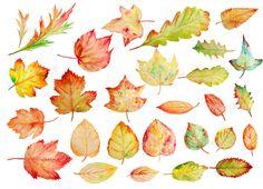 Peint l'aquarelle automne chute de feuilles à la par CornerCroft