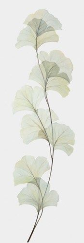 gingko silhouette. Tattoo idea, being dad's favorite tree