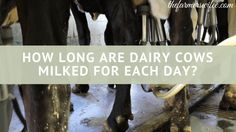 How Long are Dairy C