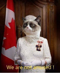 I love that this image has the Canadian flag in the background---Grumpy Cat meme #GrumpyCat