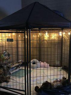 indoor rabbit cage Mini Pig I - indoormicrogreens Diy Bunny Cage, Bunny Cages, Rabbit Cage Diy, Rabbit Cages, Pet Bunny Rabbits, Pet Rabbit, Dog Room Decor, Dog Bedroom, Bunny Room