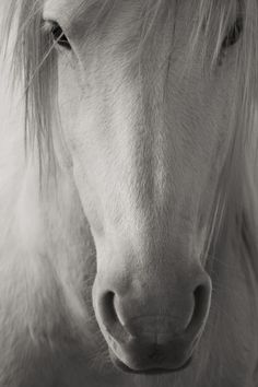 When a horse greets you with a nicker and regards you with a large and liquid eye, the question of where you want to be has been answered. http://www.annabelchaffer.com/categories/Equestrian-Gifts/