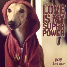 Greyhound - https://www.facebook.com/abandon.levriers.espagne