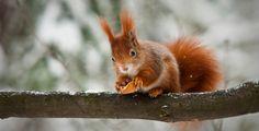 Zvířata a rostliny neomylně vědí, jaké bude v zimě počasí. Závisí na tom jejich přežití. Sledujte je a dozvíte se to také.