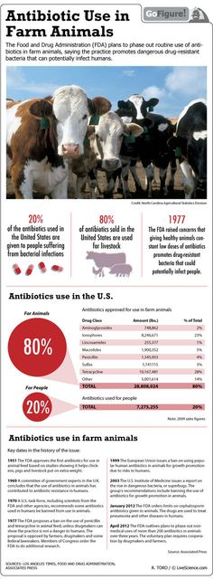 Farm animals fed Antibiotics (Infographic) stop eating corporate farmed and ranch animals. eat locally grown from small farms.  this can be done anywhere in the usa if you stand up for your rights.  read the constitution and the bill of rights. any law that is unconstitutional is illegal.