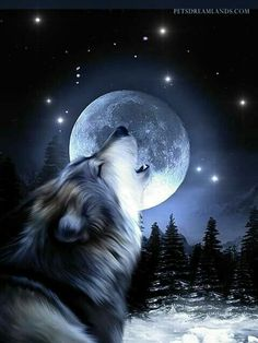 Wolf howling at the moon in the moonlight Wolf Images, Wolf Photos, Wolf Pictures, Anime Wolf, Wolf Artwork, Wolf Painting, Fantasy Wolf, Wolf Spirit Animal, Wolf Wallpaper