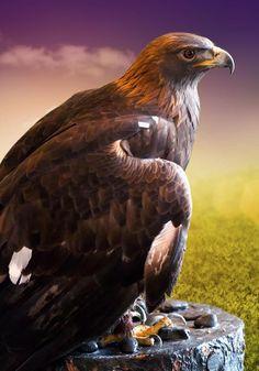 ~~Golden Eagle Ambassador Donald by Linda Tiepelman~~