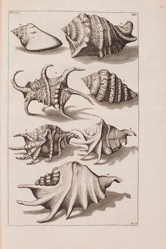 - - D'Amboinsche Rariteitkamer ... : - Biodiversity Heritage Library