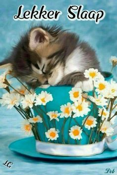 I'm soooo tired! Good Night Friends and Sweet Dreams Good Night Friends, Good Night Wishes, Good Night Sweet Dreams, Good Night Moon, Good Night Image, Good Morning Good Night, Good Night Quotes, Friends Gif, Night Gif