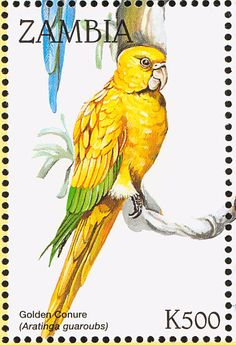 Golden Parakeet stamps - mainly images - gallery format
