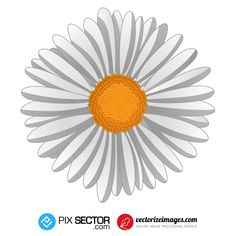 Free Vector Images, Vector Free, Free Vector Illustration, Psd Templates, Drawings, Flowers, Photos, Pictures, Sketches