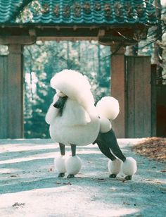 Poodles The Top Best-in-Show-Winning Non-Sporting Dog of All Time Dog Grooming Styles, Poodle Grooming, Pet Grooming, Cortes Poodle, Poodle Haircut, Cute Dogs, I Love Dogs, Poodle Cuts, Beautiful Dogs