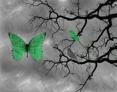 Modern Grey Green Butterfly Birds Live Laugh by LittlePiePhotoArt