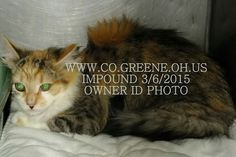 Pretty kitty is scared!  Green county OH