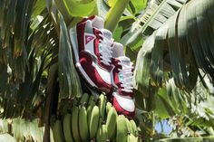 LACED x LE COQ SPORTIF (BANANABENDERS)