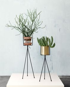 Spruce up your living room with a ferm LIVING Plant Stand in black. Our stylish plant stand for green plants matches more pots. Indoor Garden, Indoor Plants, Home And Garden, Potted Plants, Fern Planters, Copper Planters, Faux Plants, Green Plants, Outdoor Gardens