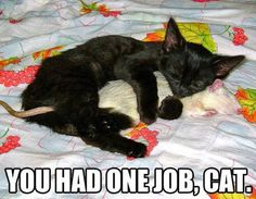 """""""You had one job cat"""" --- Seems like this sweet kitty made a new friend! --- --- If you're looking for a new furry friend, we encourage you to take a look at the shelters and humane societies in your area! The Humane Society of Fremont County Adoption Center provides a temporary home for adoptable animals waiting for their new families! http://www.canoncityhumanesociety.org/"""