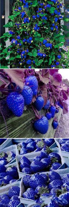 US$2.99 500Pcs Blue Strawberry Rare Fruit Vegetable Seeds Bonsai Edible Garden Climbing Plant