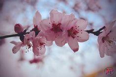 "32 aprecieri, 1 comentarii - Xenia Catalina (@xeniacatalina) pe Instagram: ""🌸🌸🌸#nikon #photography #spring #flowers #pink #mywork #macro #photographer"" Spring, Nikon, My Photos, Rose, Instagram Posts, Flowers, Plants, Photography, Pink"