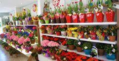 Franquia de floricultura: Quanto custa? Como montar? Stuffed Peppers, Vegetables, Design, Hamper, Investing, Ideas, Entrepreneurship, Hampers, Flowers