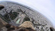 すごい!ワシの背中に小型カメラを付けた鳥視点映像。最後は見事に着地。◆時速180kmで空を駆け抜ける「ワシ」の目から見たパリ : ギズモード・ジャパン http://www.gizmodo.jp/2014/11/180km.html