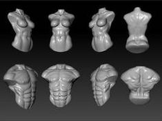 male and female torso study in zbrush. male and female torso study Zbrush Anatomy, 3d Anatomy, Human Body Anatomy, Anatomy Sketches, Anatomy Poses, Anatomy Study, Anatomy Drawing, Body Reference, Anatomy Reference