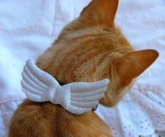 My angel cat collar accessory Hug Your Cat Day, Personalised Christmas Cards, Makeup And Beauty Blog, Cat Makeup, Cat Accessories, Here Kitty Kitty, Cat Collars, Christmas Cats, Cat Life