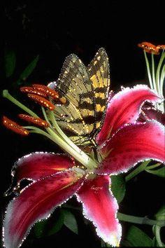 Butterfly/Flower (GIF)